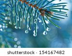 Blue Spruce With Drops Of Wate...