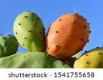 Closeup Of Colored Ripe Fruits...