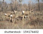 Wyoming Wildlife Meanders Along ...