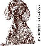 dachshund - stock vector