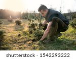 Young Man Plant A Small Tree In ...