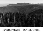 A greyscale view from Clingman