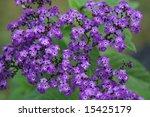Beautiful Purple Grouping Of...
