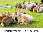 Group Of Rabbits Eating Food In ...