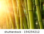 Bamboo Green Forest Background