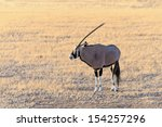 Gemsbok  Oryx  In Namib...