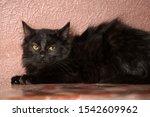 Black Fluffy Kitten On A Brown...