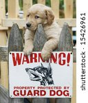 "adorable golden retriever puppy on fence with sign ""warning...property protected by guard dog"" - stock photo"