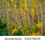 Aspen Grove In Lundy Canyon ...