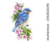 Bluebird Sitting On Blooming...