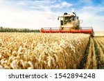 Small photo of Combine harvester harvests ripe wheat. Ripe ears of gold field on the sunset cloudy orange sky background. . Concept of a rich harvest. Agriculture image.