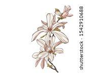 sketch floral botany collection.... | Shutterstock .eps vector #1542910688