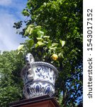 Lemon In A Vase Outdoors In The ...