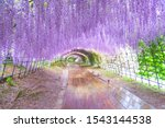 The Great Wisteria Flower Arch. ...