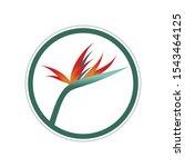 bird of paradise flower circle...   Shutterstock .eps vector #1543464125