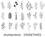 collection forest fern...   Shutterstock .eps vector #1543674452
