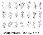 collection forest fern...   Shutterstock .eps vector #1543675715