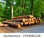 cut felled logs in the forest | Shutterstock . vector #1544082128
