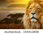 Stock photo lion portrait on savanna landscape background and mount kilimanjaro at sunset 154412858