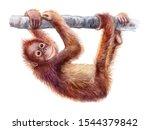 Orangutan Baby. Realistic Red...