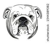 Portrait Muzzle English Bulldog ...
