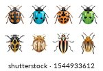 1 set of ladybugs with different colors and shapes. 8 kinds of ladybugs. insect type animals with white isolated background.