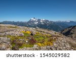 Bright green moss with yellow and purple flowers beside Mount Baker