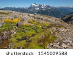Patches of bright green moss, yellow and purple flowers cover rocky ridge on Mount Baker