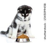 Siberian Husky Puppy Looks At...