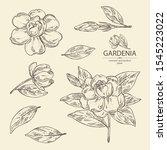 Collection Of Gardenia ...