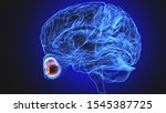 3d rendered medically accurate... | Shutterstock . vector #1545387725