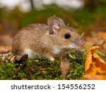 yellow necked mouse on forest floor - stock photo