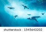Diving Penguin Herd. Ocean...
