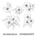 Set Of Apple Flowers. Vector...