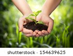 plant in hands   grass... | Shutterstock . vector #154639625