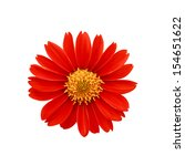 Red Flowers   Clipping Path...