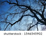 Network Of Barren Branches Of...