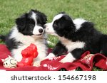 Stock photo adorable border collie puppies playing in the garden 154667198