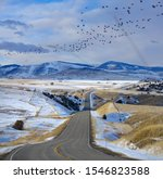 Large flock of wild birds flies over the empty road in the picturesque Montana countryside. Scenic view of birds flying over an empty asphalt freeway crossing the beautiful prairie in United States.