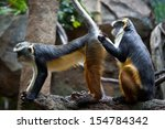 Stock photo funny monkeys grooming each other 154784342