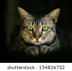 Green Eyed Cat In Hideout With...