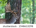 A Deer In Front Of A Tree