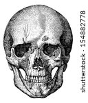 Bony Skeleton Of The Face And...