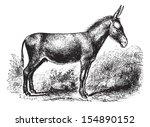 Donkey On Field  Vintage...