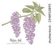 sketch floral botany collection.... | Shutterstock .eps vector #1548910895