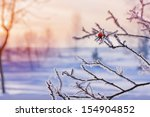 Winter Landscape With Red Rose...