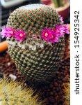 Miniature Cactus Flower...