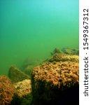 underwater freshwater flora ... | Shutterstock . vector #1549367312