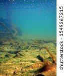 underwater freshwater flora ... | Shutterstock . vector #1549367315