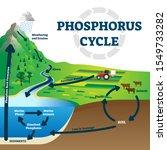phosphorus cycle vector... | Shutterstock .eps vector #1549733282